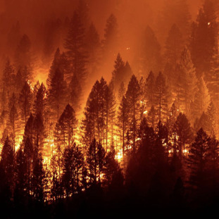 forest wildfire at night